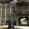 The Prytania Oaks