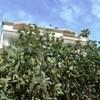 Apartment Hvar Kroz Burak