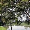 Joe's Habarana Village