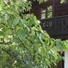 Haus Stenitzer
