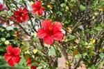 Hibiscus Affittacamere