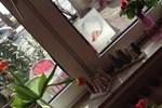 Отель Hotel Weser Rose