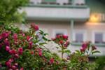 Отель Gartenhotel Salzach
