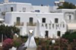 Отель Artemis Hotel