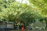 Отель Camping des Alberes