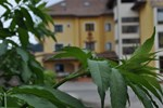 Отель Hotel Duca Di Calabria