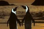 Penguinden