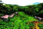 Отель The Rainforest Ecolodge