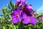 Lavender Grove Farm B&B