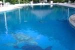 Отель Hotel y Club Campestre Altos Paraiso