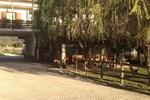 Отель Agritur Erta