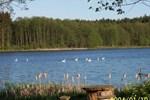 Отель Agroturystyka nad jeziorem Sopień
