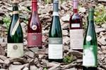 Гостевой дом Wein- und Sektgut Markus Hensler