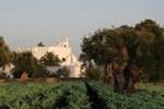 Отель Masseria Torremossa