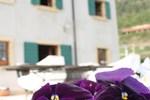 Отель B&B Antica Valpolicella