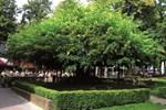 Отель Chalet Vakantiepark De ReebokI