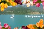 Мини-отель B&B Il Tulipano sul Lago
