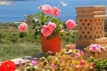 Mediterranea Gozo