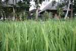 Гостевой дом Umasari Rice Terrace Villa