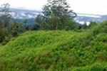 Naturedale