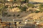 Отель Alpaca Farm