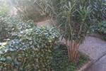 Isola d'Elba: appartamento 6 posti letto con giardino