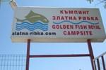 Camping Goldfish