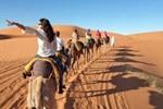 Bivouac Camel Trips