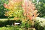 Апартаменты Acacia Spa Garden Suite
