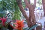 Iguanaplaya B&B