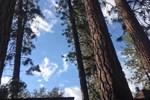 Апартаменты Yosemite's Anglers Rest