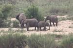 Вилла Kruger River Villas