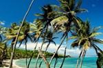 Отель Sugar Reef Bequia