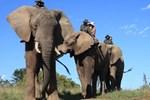 Отель Addo Elephant Back Safaris
