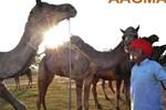 Отель Abhaneri Village Safari Camp