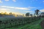 Hanging Tree Wines