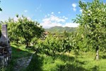 Апартаменты Mozzanella Holiday Home in Garfagnana