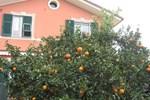 Le Clementine B&B