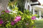 Lamphun Garden Home