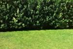 Мини-отель Quartello Garden