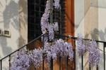 Апартаменты Agriturismo Villa Feriani
