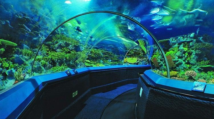 В Подмосковье открывается океанариум