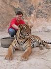 Храм для тигров - тигр. И автор ©Kitya Karlson