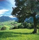 Летние пейзажи Флахау