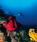 Богатый подводный мир архипелага Канарреос