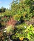 Ботанический сад в Соликамске