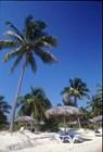 Остров зари багровой…