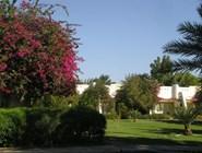 Coralia Club: garden-view