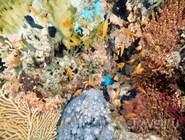 Подводный мир Красного моря, Нувейба