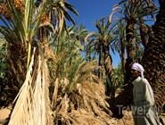 Ферма в оазисе Фейрен, Синай